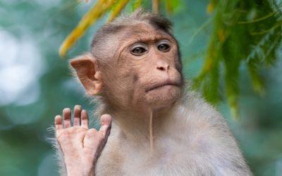 De pushy aap